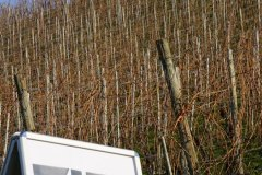 CrossMeersburg20200209_WM_003